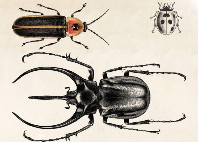 The Beetle Collector's Handbook