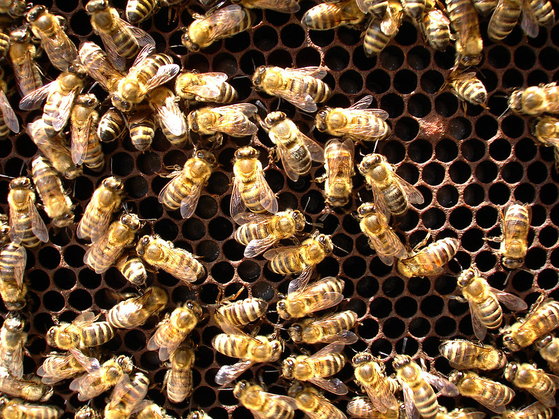 Save Britain's Bees
